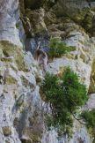 Cedar on escarpment face. Photo: Fiona Reid