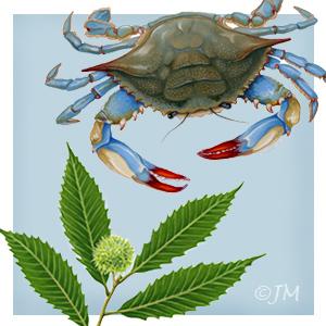 mahannah_crab_gallery