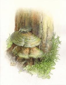Bracket Fungus (Ganoderma)