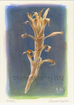 """""""Dusk"""" – Dry Bromeliad Stem by Kathryn Chorney"""