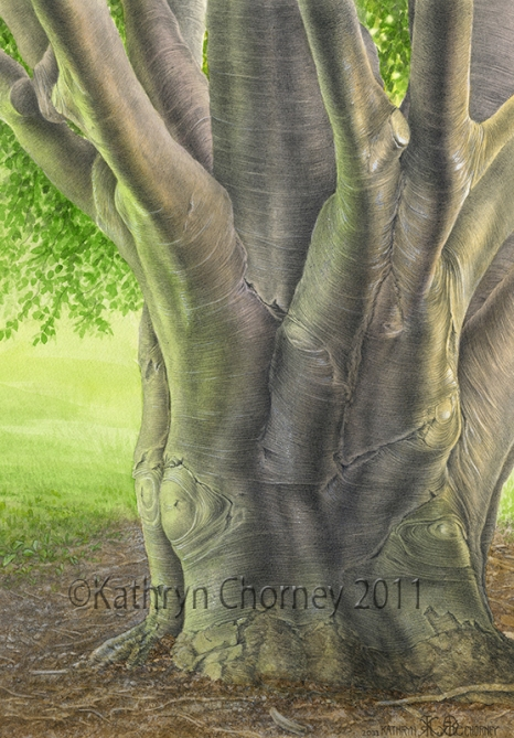 European Beech by Kathryn Chorney