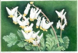 Dutchman's Breeches by Trish M. Murphy