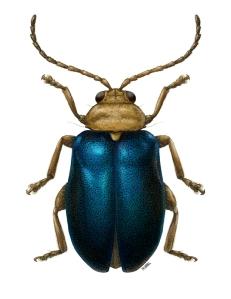 harel_3_beetle