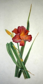 Day Lily by Karen Logan