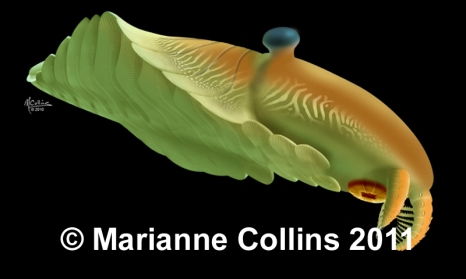 Laggania – Burgess Shale fossil reconstruction by Marianne Collins