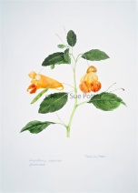 Jewelweed by Nellie Sue Potter