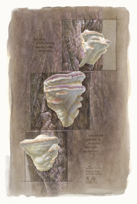 Kathry Chorney, Polyphore fungi. Watercolour and graphite.