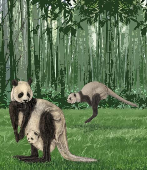 Maayan Harel: Pandaroo