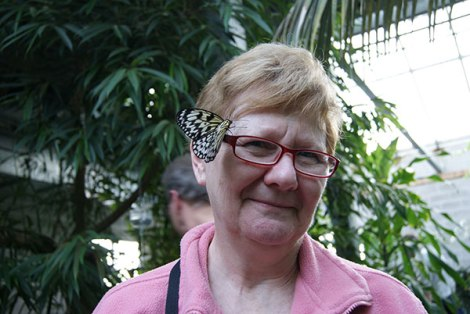 SONSI member at The Cambridge Butterfly Conservatory