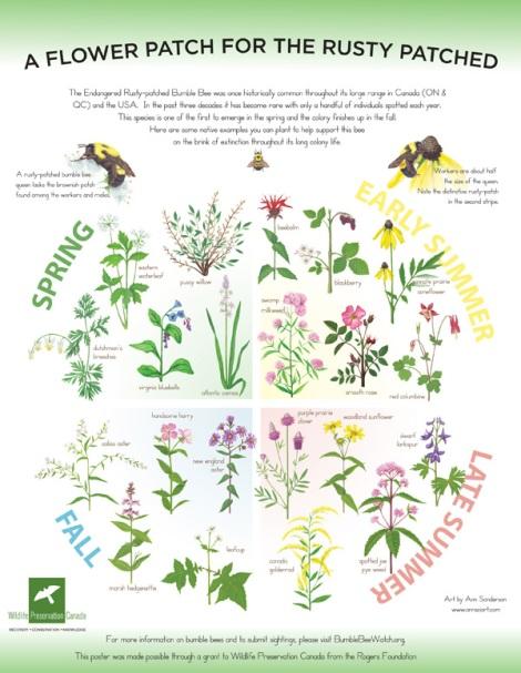 Flower Poster Illustration © Ann Sanderson