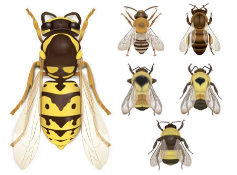 Wasp and Bees Illustration © Ann Sanderson