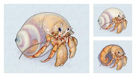 herman_2_crab