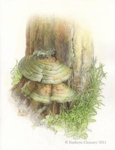 """""""Bracket Fungus on Stump"""" by Kathryn Chorney"""