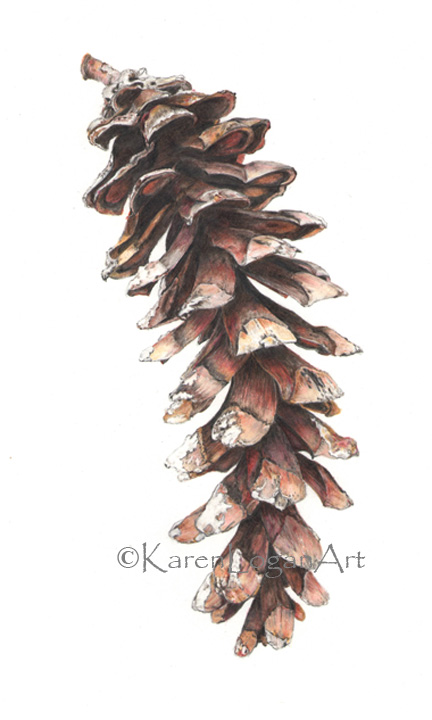"""White Pine, Cone"" by Karen Logan"